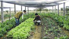 http://entremujeres.clarin.com/hogar-y-familia/hogar-y-deco/huerta-jardin-jardineria-casa-hogar-quinta-country-cultivos-espinaca-rucula-pimientos-frutales-hierbas_aromaticas-vegetales_0_1334870036.html