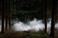 Between the Trees by Ellie Davies