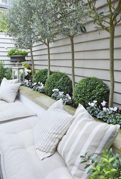 Standard trees and shrubs are a great way to provide height, greenery and interest behind Garden seats.