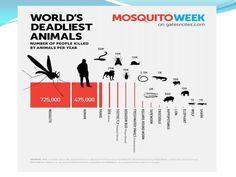 Los animales que más personas matan