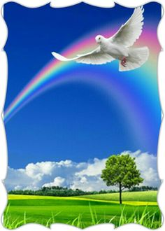 Rainbow Dove!!!...🌈🔸🌈 Best Photo Background, Frame Background, Background Images, Peace Pictures, Nature Pictures, Beautiful Pictures, S8 Wallpaper, Marvel Wallpaper, Picture Borders