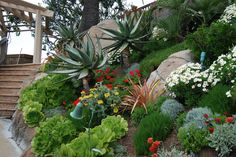 A pleasant blend of succullent, Mediterranean-climate plants and colorful perennials make this a cheerful presentation.