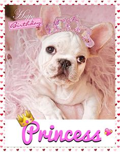 """Happy Birthday!"", French Bulldog Puppy Princess❤️"