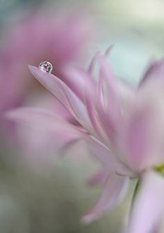 In pink delight by Heidi Westum on 500px