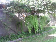Samambaia e saião, em quintal na cidade de Magé, RJ