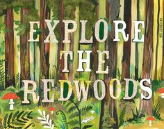 Explore The Redwoods art print | Sticker nature | Typographie mixte