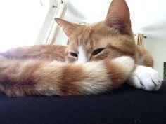 Dit is mijn kat Wout hij is de zoon van onze poes Minoes