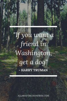 Our dogs are our best friends in the world without a doubt. Show your love and appreciation for these adorable doggos with these 21 inspiring dog quotes. John Grogan, Great Quotes, Inspirational Quotes, Harry Truman, Cesar Millan, Read Later, Quote Board, Little Puppies, Bichon Frise