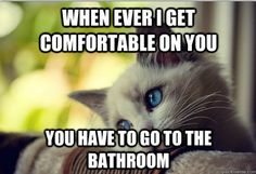 The Best Of First-World Cat Problems