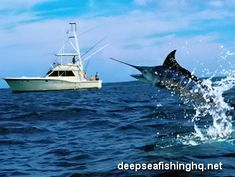 Deep Sea Fishing for swordfish & marlin