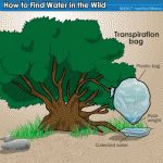 DIY Solar water still and tree collection. How to collect water in a survival situation.