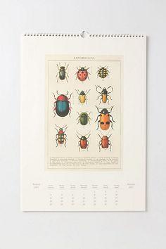anthropologie entomology wall calendar
