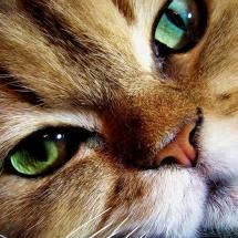 Todays 33 funny Cats - Time For Funny Pretty Cats, Beautiful Cats, Animals Beautiful, Cute Animals, Gorgeous Eyes, Amazing Eyes, Pretty Kitty, Crazy Cat Lady, Crazy Cats