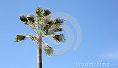 Photo about Palm tree, pedestrian perspective. Image of coastline, islands, holiday - 70321589 Pedestrian, Palm Trees, Perspective, Sky, Stock Photos, Island, Holiday, Flowers, Plants