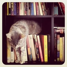 Cats and books! Cats and books!