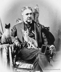Mashup presidents: Chester A. Arthur - Cat Groomer : US President Chester A. Arthur with cats It's not very well-known, but Chester A. Arthur comes from a long line of cat groomers. In fact, he's one of the most renown cat groomers to ever be president. Siamese Cats, Cats And Kittens, Siamese Dream, Crazy Cat Lady, Crazy Cats, I Love Cats, Cool Cats, Celebrities With Cats, Celebs