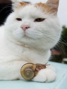 Shiro, there's a snail on your palm