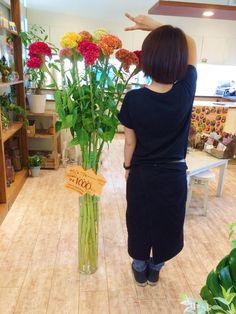 154cm 超特大の セッカケイトウ 千葉県の大野さんから 届きましたΣ(゚∀゚ノ)ノ
