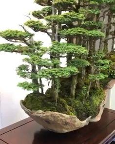 Rare Bonsai Forest – Best Home Plants Miniature Trees, Zen Garden, Garden Landscape Design, Miniature Garden, Bonsai Forest, Garden Terrarium, Mini Garden, Japanese Garden, Plants