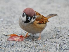 SCIENCE IN PICS: Tweet for the Sparrow.