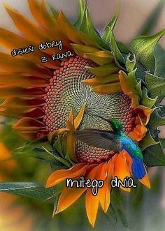 Red Bird Tattoos, Black Bird Tattoo, Sunflower Photography, Nature Photography, Sweets Photography, Bird Tattoo Neck, Bird Cage Centerpiece, Watercolor Sunflower, Bird Silhouette