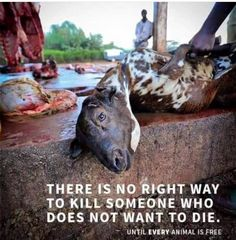 I'm so ashamed to be part of the human species! Save Animals, Animals And Pets, Mon Combat, Animal Slaughter, How To Become Vegan, Animal Agriculture, Vegan Quotes, Why Vegan, Stop Animal Cruelty