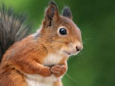 25 Photos Of The Ever Underrated And Adorable Squirrel