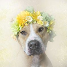 CASANOVA - Hempstead Town Animal Shelter (LI) is available for adoption