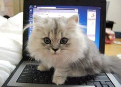 Cats have an infallible understanding of total concentration--and get between you and it. --Arthur Bridges