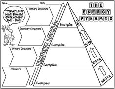 7 Best Energy Pyramid images | Science resources, Science classroom ...