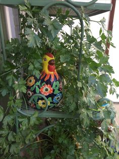 Our parsley chicken! Amazing the amount of parsley I can grow and harvest from this one little chicken pot :) - 2017 Parsley, Harvest, Canning, Chicken, Christmas Ornaments, Holiday Decor, Amazing, Home Decor, Homemade Home Decor