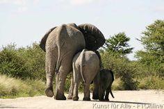 Rüsseltier,+Afrikanischer+Elefant,+Etoscha+Wildpark,+Tierfamilie