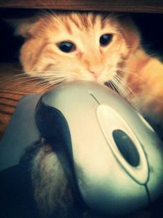 That's MY mouse Jules!