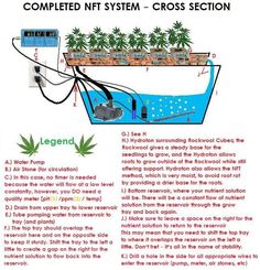 Learn How to Build Your Own Budget #NFT #Hydroponics System