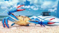Blue Crab Beach Sand HD Wallpaper