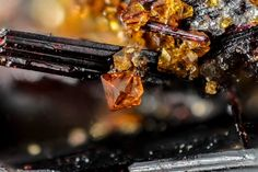 groupe Roméite, (Ca,Fe,Mn,Na)2(Sb,Ti)2O6(O,OH,F), Piemontite, {Ca2}{Al2Mn3+}(Si2O7)(SiO4)O(OH). Prabornaz Mine, Saint-Marcel, Aosta Valley, Italy FOV=1.94 mm Collection et photo Giuseppe Finello