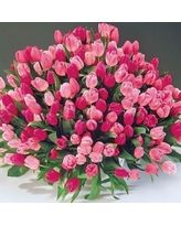 Tulips - Apple Blossom<sup>™</sup> Tulip Mixture Summer Bulbs, Spring Flowering Bulbs, Spring Bulbs, Spring Blooms, Pink Tulips, Tulips Flowers, Pink Roses, Shade Flowers, Bulb Flowers