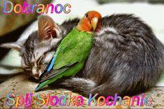 Wierszyki i gify na dobranoc: Gify na dobranoc kotki Humor, Cats, Animals, Dog Love, Humour, Animais, Gatos, Animales, Kitty Cats