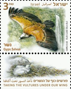 Stamp: Griffon Vulture (Gyps fulvus) (Israel) (Taking the Vultures under our…