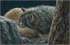 Robert Bateman - Dozing Wolf -