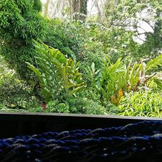 When this is the view from your balcony... #cahuita #junglelife #justperfect #caribbean #costarica #puravida #nature #nofilterneeded