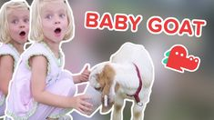 Baby Goats: Funniest Animal Videos, Clips & Compilation… #funnypetvideos #funnyanimals