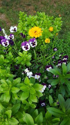 Whisky barrel flowers