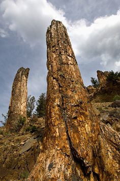 See what the climate was like in Yellowstone Country 50 million years ago and view the fascinating petrified trees in Yellowstone's world-class fossil forests. Yellowstone Camping, Yellowstone Nationalpark, Off Road Camping, Camping Gear, Scenery Pictures, Natural Phenomena, Natural Wonders, Travel Posters, The Great Outdoors