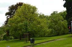 #nature #arbre #paysage #parc