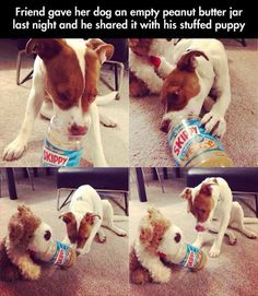 Funny Pictures Of The Day - 100 Pics Dog shares jar of peanut butter with his stuffed animal friend. People learn something from this please. Animals are amazing and deserve respect and honor. All animals, not just dogs. Love My Dog, Puppy Love, Funny Shit, Funny Cute, Funny Memes, Funniest Memes, Super Funny, Funny Stuff, Hilarious