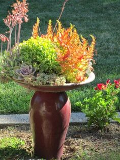 succulents planted in a cracked bird bath
