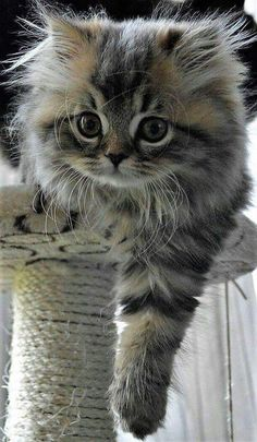 Mother Cats taking care and Protecting their cute Kittens safety Cute Baby Cats, Cute Little Animals, Cute Cats And Kittens, Kittens Cutest, I Love Cats, Pretty Cats, Beautiful Cats, Animals Beautiful, Pretty Kitty