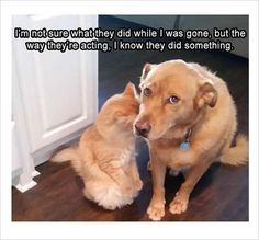 dog and cat did something funny memes