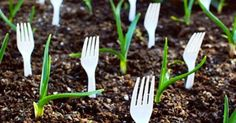 I never knew that I could plant my plastic fork—so nifty!
